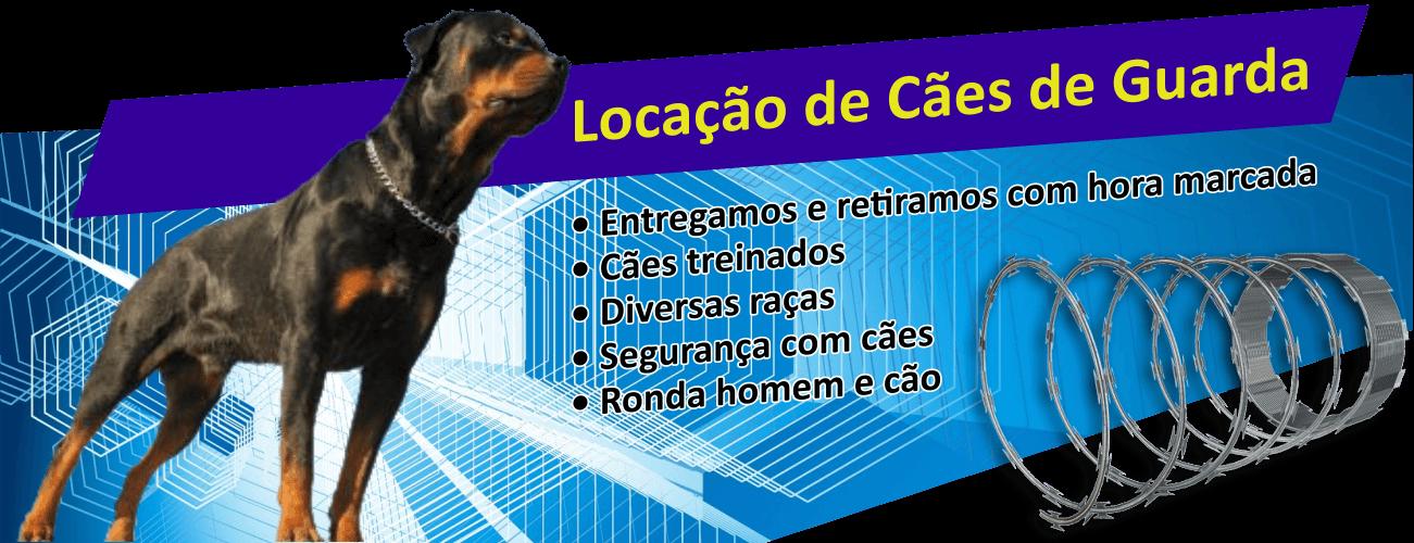 Concertinas e Redes Laminadas em Santos